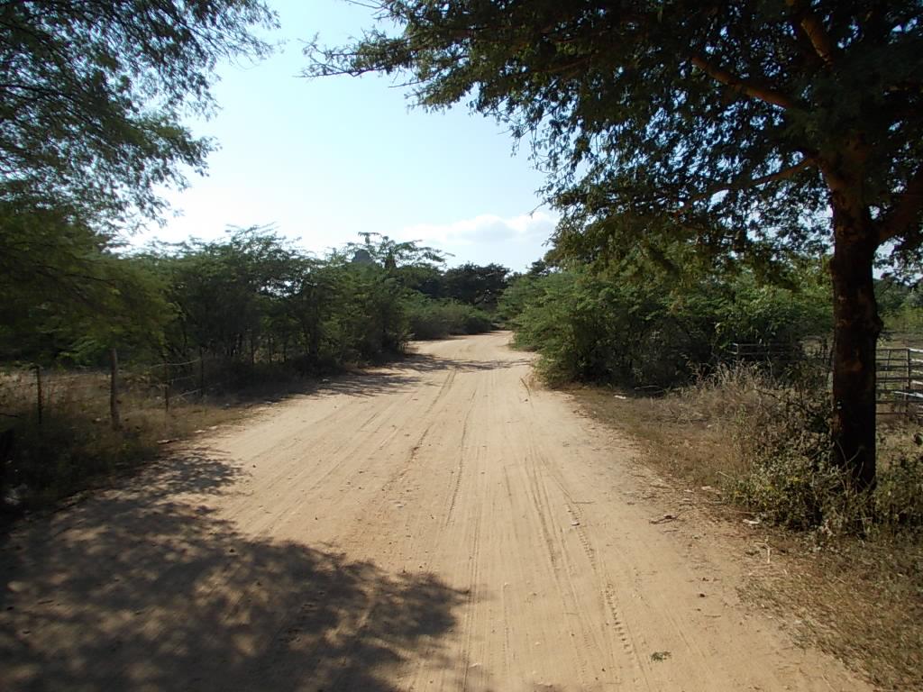 バガン・遺跡めぐりの道中(舗装されていないところはこんな感じ