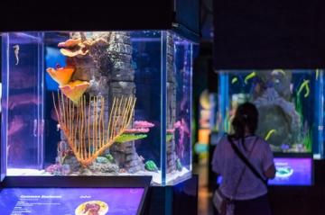 バンコクの水族館.入って直ぐ
