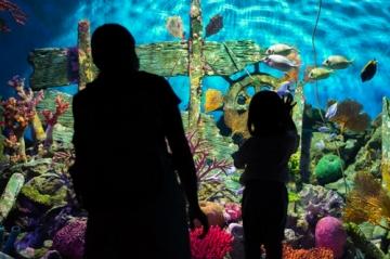 バンコクの水族館を楽しむ